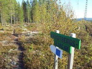 Toppen av Margitberget, i Jokkmokk har vi fin terräng för löpning.