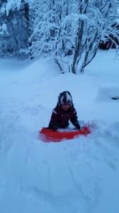 Dagens aktivitet! ingen skidåkning men väl bobåkning-som bilden väl skvallrar om inte från idag då alla snö blåst ner:)
