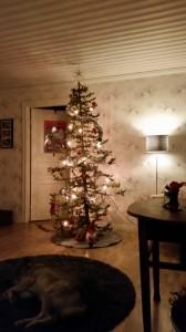 Måste bara få bjuda på året julgran- topp 2 i fulaste gran för oss;)